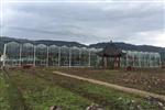 四川雅安雨城区农业局玻璃温室-建川温室案例