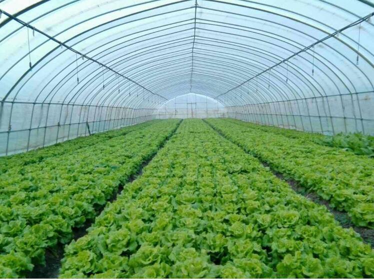 春季成都蔬菜亚搏app安卓内的空气湿度如何控制
